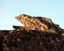 印度灵鹫山介绍灵鹫山的历史